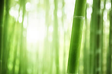 Green bamboo ppt background image